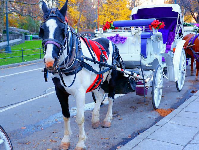 Paseo en coche de caballos por Central Park