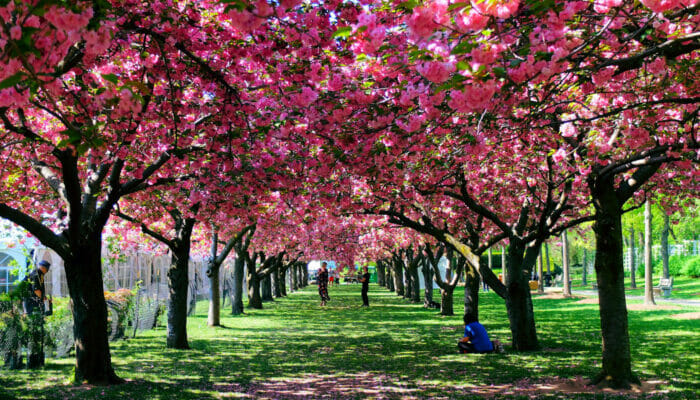 El tiempo en Nueva York - Primavera
