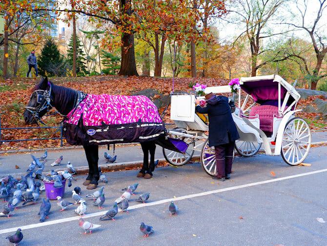 Paseo en coche de caballos por Central Park - guía