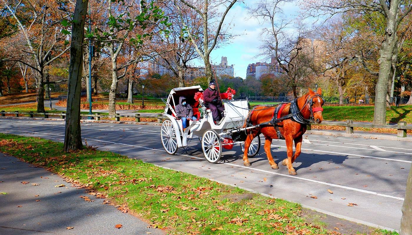 Paseo en coche de caballos por Central Park - carruajes