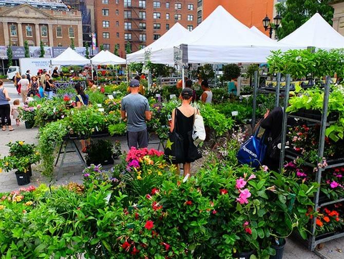 Mercados de Nueva York - Plantas en Union Square