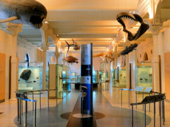 American Museum of Natural History in New York - Tour exclusivo