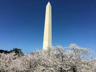 Excursion de un dia a Washington DC - Monumento