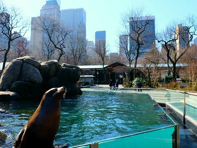 Tickets para el Central Park Zoo