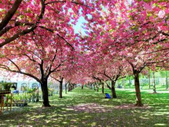 Brooklyn en Nueva York - Botanic Garden